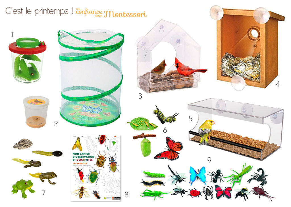 Observation des insectes et animaux