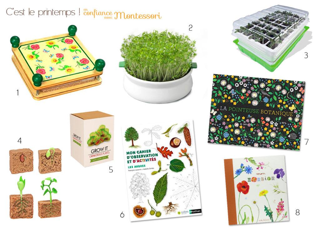 0bservation plantes fleurs