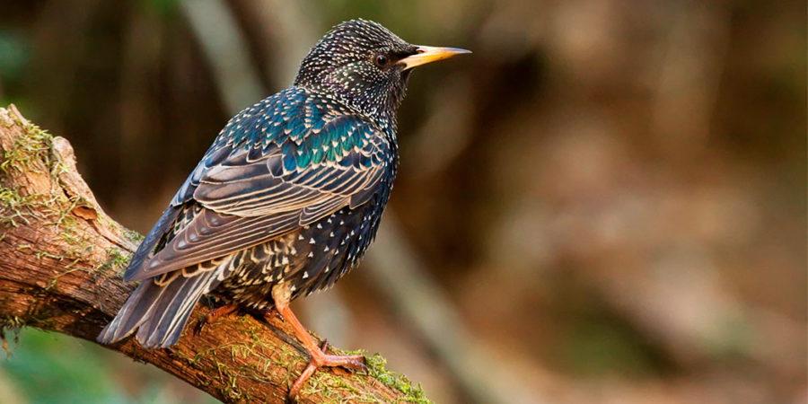 Images classifiées sur les oiseaux