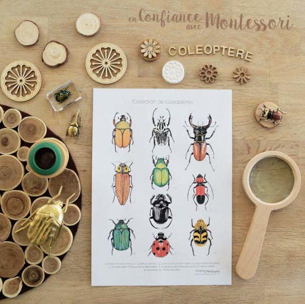 Affiche collection coléoptères