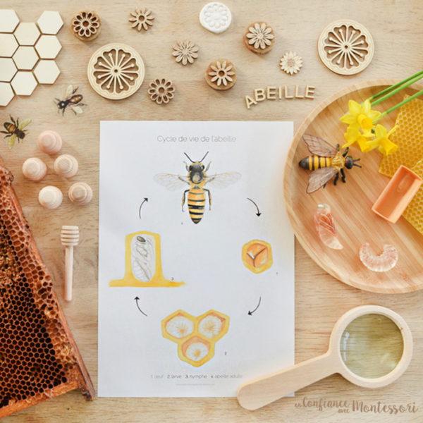 Affiche cycle de vie de l'abeille