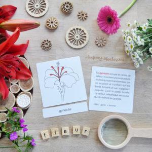 Cartes de nomenclature Fleur