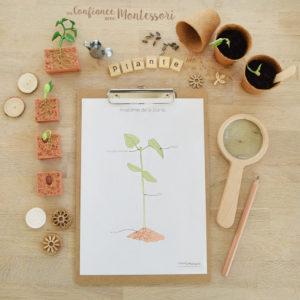 Affiches Anatomie Plante