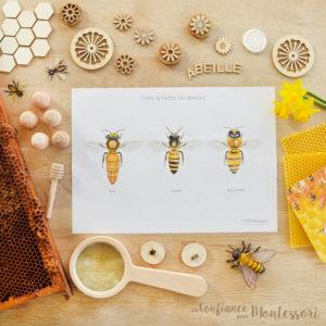 Affiche famille de l'abeille