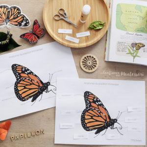 Affiches anatomie du papillon Monarque