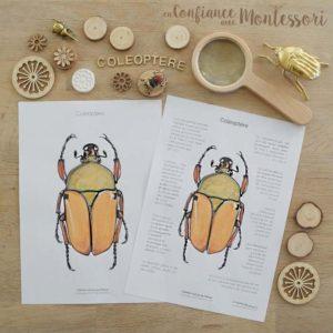 Affiche de renseignements sur les coléoptères