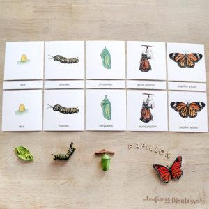 Cartes de nomenclature papillon Monarque