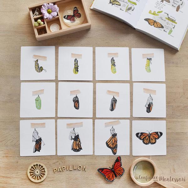 Images séquentielles papillon Monarque