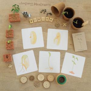 Cartes séquentielles sur la germination de la graine