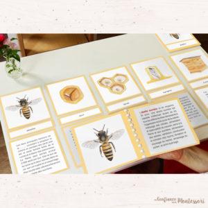 Cartes de nomenclature abeille