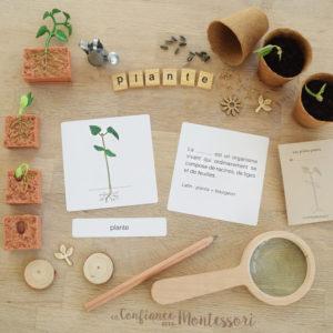 Cartes de nomenclature plante