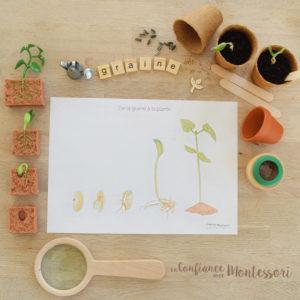 Affiche germination de la graine