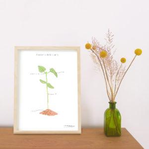Affiche Anatomie Plante