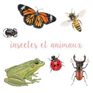 Insectes et animaux