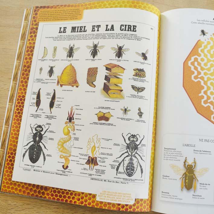 Livre 2 sur le thème de l'abeille