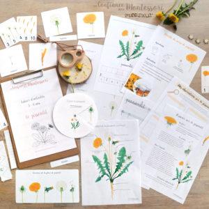 Pack Montessori sur le thème du Pissenlit