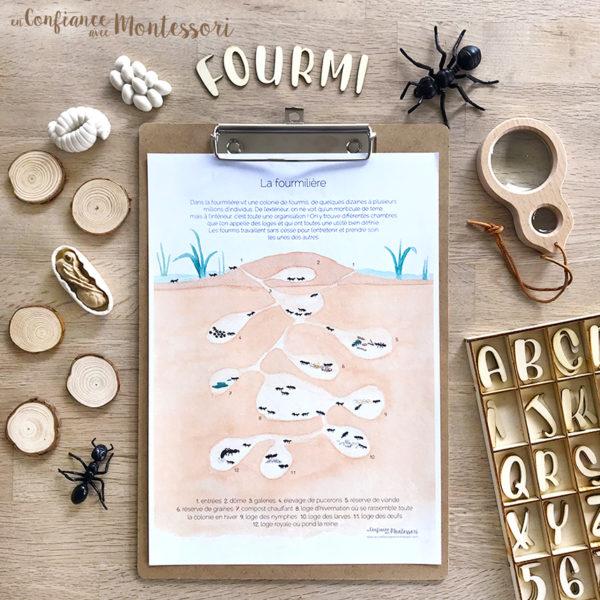 Affiche d'inspiration Montessori sur la fourmilière