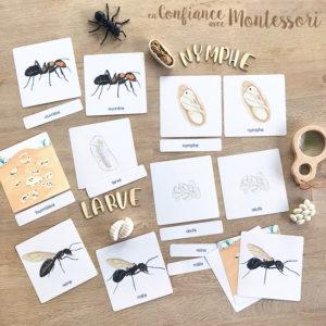 Images classifiées sur le thème de la fourmi