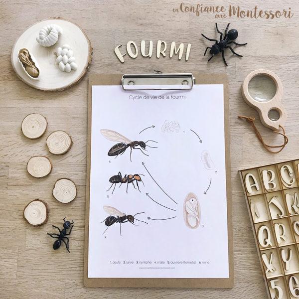 Affiche d'inspiration Montessori sur le cycle de vie de la fourmi