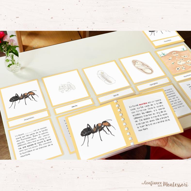 Cartes de nomenclature Montessori sur le thème de la fourmi