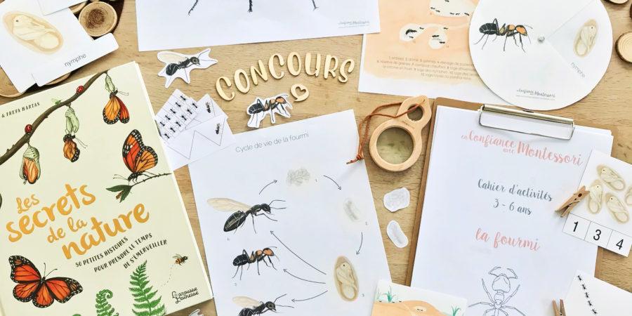Ensemble des activités Montessori du Pack de découverte de la fourmi