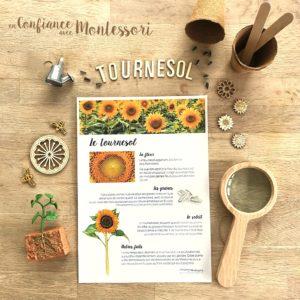 Affiche d'inspiration Montessori sur des faits à savoir sur le tournesol