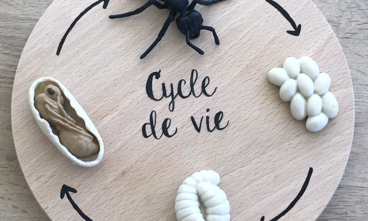 DYI Plateau cycle de vie